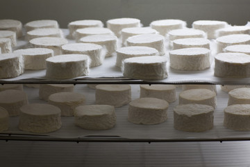 Organic Goat Cheese in Process