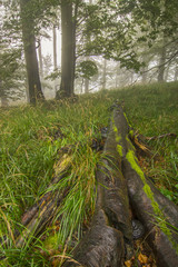 Fallen tree in forest grass
