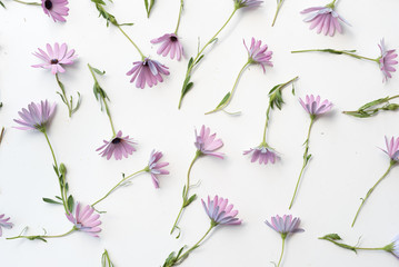 High angle full frame view of soft purple daisies scattered on white background