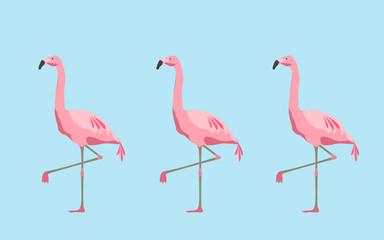 pink flamingo birds over blue background
