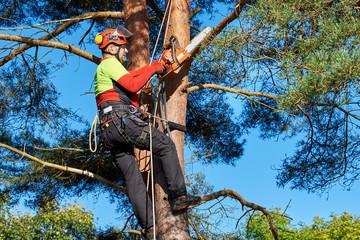 Klettergurt Für Baumpflege : Bilder und videos suchen: baumpflege