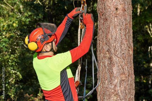 Klettergurt Baumpflege Gebraucht : Baumkletterer mit säge und klettergurt holzfäller bei der arbeit