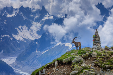 Wall Mural - Ibex, Range of Mont-Blanc, French Alps