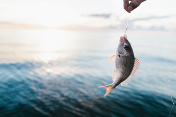 A fish caught with a hook and line