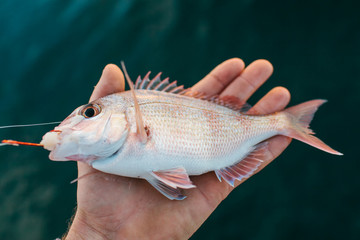 Small fish in a persons hand