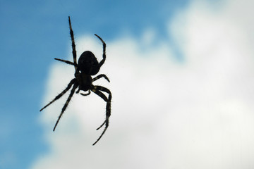 spider shape hanging in the air in blue sky and white clouds background