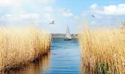 idyllisches Ufer der Schlei bei Schleswig mit Segelboot und Möwen