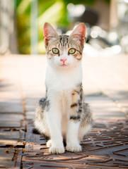 Junge Katze mit leuchtend grünen Augen sitzt auf der Strasse