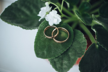 Golden wedding rings . Wedding ring with space for text. Stylish wedding rings on beautiful fresh green leaves of a plant love concept. Rings on a tree branch. Jewelry.