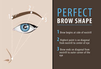 Perfect eyebrow shape tutorial. vector template