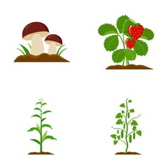 Mushrooms, strawberries, corn, cucumber.Plant set collection icons in cartoon style vector symbol stock illustration web.