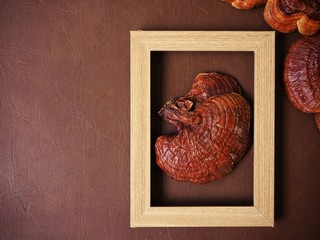 Ganoderma Lucidum - Ling Zhi Mushroom with picture frame