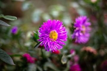 Beautiful pink flower in the garden