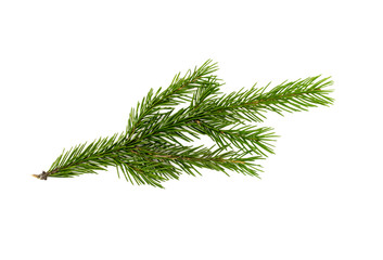 Christmas tree fir branches isolated on white background. Christmas decoration.