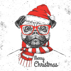 Christmas Hipster fashion animal pug-dog dressed  a New Year hat and scarf