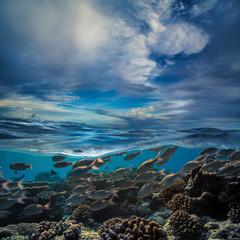 Tropical water full of fish underwater