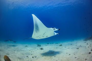Maldivian tropical water wildlife