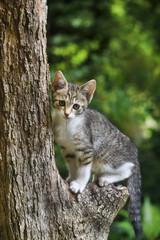 木登り子猫(キジシロ)