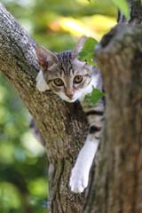 木の上でくつろぐ子猫(キジシロ)