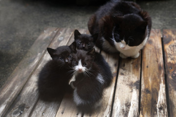 ハチワレの母猫と三姉妹の子猫