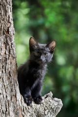 木の上の子猫(クロネコ)