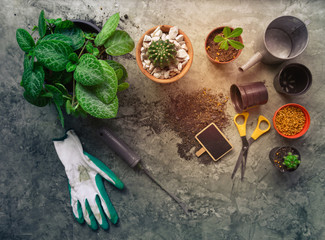 Flat lay gardening desk with Flame Violet,Cactus plants in pot,glove and fork on vintage wood background