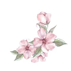 Watercolor branch with flowers. Wedding, birthday, Valentine's Day, Mother's Day Isolated on white background