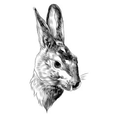 rabbit sketch vector graphics head black-and-white monochrome pattern