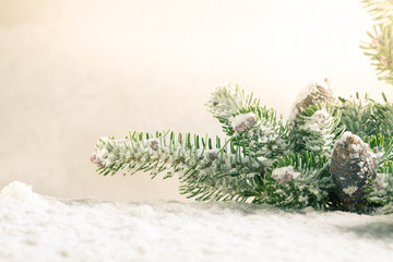 Spruce twig with cones sprinkled with snow.