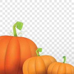 autumn vector orange pumpkins border design template for banners and thanksgiving day backgrounds.