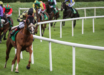 lead horse and jockey in a race taking the final corner
