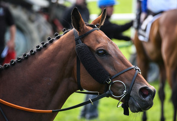Close-up portrait of a racehorse on the track