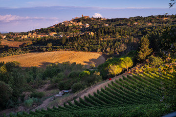 Casale Marittimo, Tuscany, Italy, view from the vineyard on september