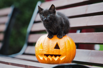 black kitten sitting on top of a carved pumpkin