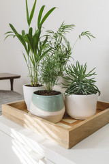 Modern planters and greenery sitting on wood try