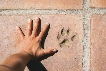 Person hand and footprint dog