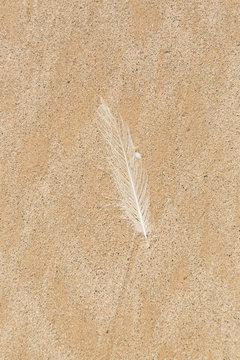 A white feather against clean sand on a beach