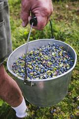 Bucket O' Maine Wild Blueberries