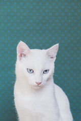 Portrait of a beautiful white cat