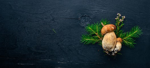 Mushroom Boletus. Fresh forest mushrooms on a black wooden background. Top view. Free space for text.