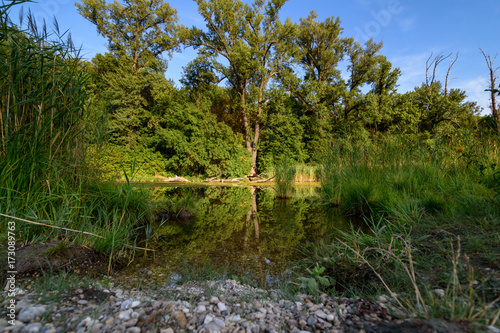 Large Pond In The Forest Of Lobau Stock Photo And Royalty Free