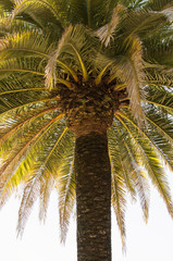 View from Underneath a Palm Tree