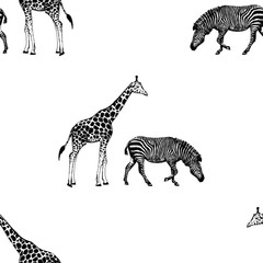 Seamless pattern of hand drawn sketch style giraffe and zebra. Vector illustration isolated on white background.