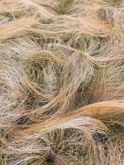 Close up of ornamental grasses