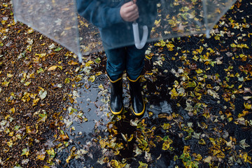 little boy with umbrella in the rain, yellow leaves on the ground