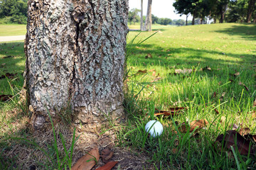 Golf Ball at Tree Bottom Obstruction