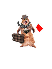funny cat with suitcase and camera.