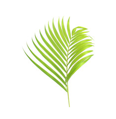 green palm leaf isolate on white background