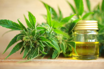 cannabis oil and hemp