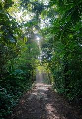 Jungle path, Bastimentos island, Panama, Bocas del Toro, Central America